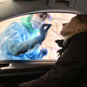 Drive-in coronatest. En skötare i skyddsutrustning sticker in en lång vaddpinne i näsan på en kvinna i en bil.