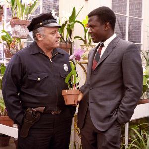 Univormupukuinen poliisipäällikkö Rod Steiger ja kravattikaulainen rikosetsivä Sidney Poitier tarkastelevat orkideaa elokuvassa Yön kuumuudessa