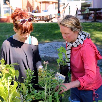 Kaksi hanketyöntekijää järjestelee kasveja.