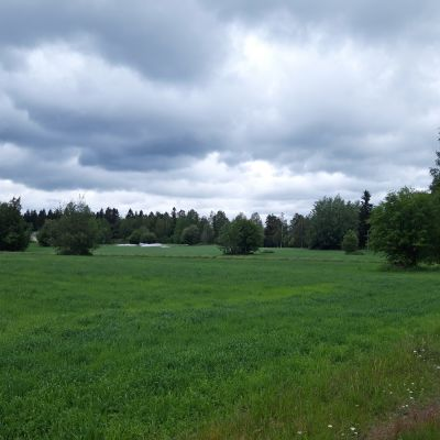 Janssonin pellot Kokkolan Hakalahdessa.