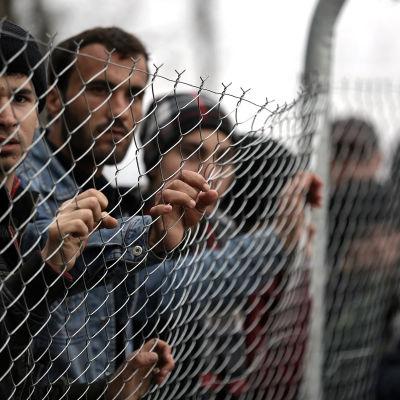 Flyktingar vid gränsövergången i Idomeni i Grekland