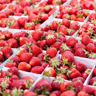 Lådor med jordgubbar står tätt intill varandra.