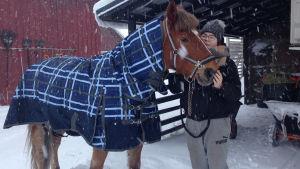 En kvinna står intill en häst utomhus i snön. Kvinnan håller sin hand på hästens mule.