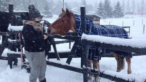 En kvinna står bredvid en häst i en hästhage.