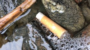 Tupakantumppi meressä