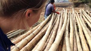 Sopivien bamburunkojen valintaa