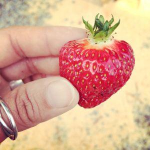 Hand håller jordgubbe