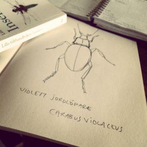 Närbild på blyertsteckning av insekt