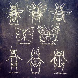 Mustavalkoinen maalaus eri hyönteisistä.