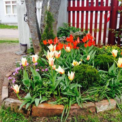 Anneli Sjöholms trädgård i Lovisa.