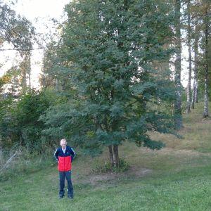 Mies ja puu.