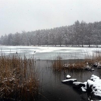 Snöfall över Metviken i Vasa. Slutet av april.