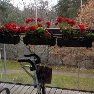 Blommor och rollator på inglasad balkong