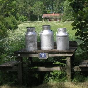 Tre mjölkrukor av plåt (mjölkstånkor) i idylliskt sommarlandskap.