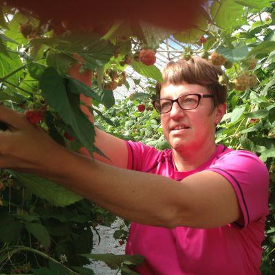 Yvonne Hammar odlar hallon i växthus