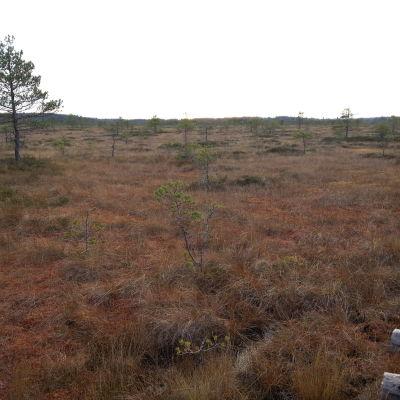 Myr i Torronsuo nationalpark nära Somero i november 2014