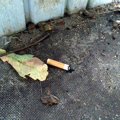 Tobaksfimp bredvid ett löv.