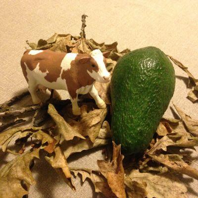En leksaksko i plast bredvid en avokado. Torra löv ska symbolisera skövlad regnskog.