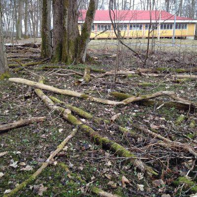 nerfallna trädgrenar hus i bakgrunden