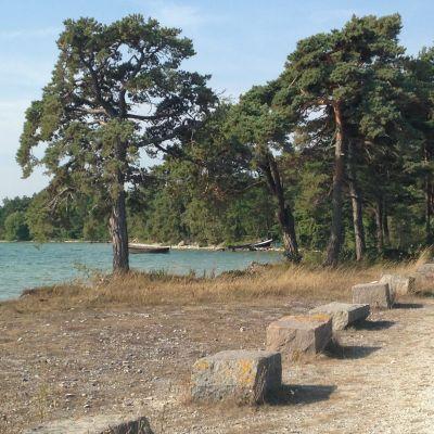 Området på Gotland där Nordkalk vill bygga ett kalkbrott.
