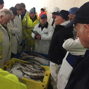 Fiskauktion i Grimsby