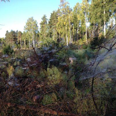 Rävnäs-Kursand i Österby i Raseborg