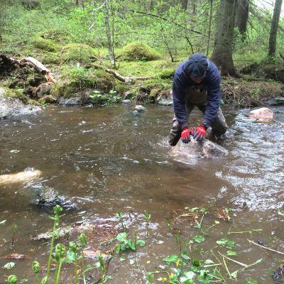 Mies vierittää kiveä joessa.