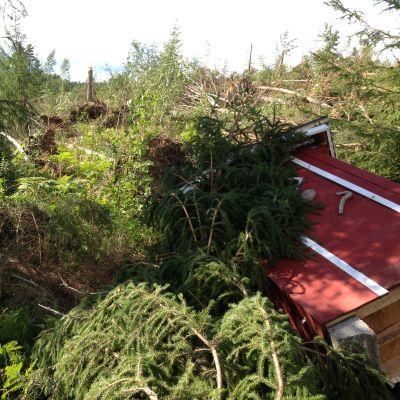 Kaatuneita puita ja rakennus.