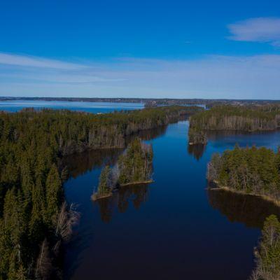 Dronella otettu maisemakuva, järveä ja metsää.