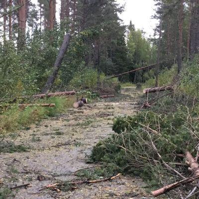 Metsätielle kaatuneita puita Kokkolan Möllerissä.