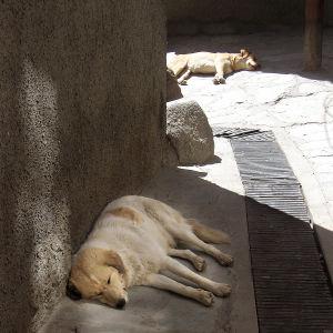 Koirat viihtyvät Leh'n kujilla