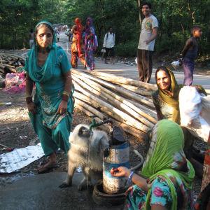 Intialaiset syöttävät Hanuman-apinajumalaa muistuttavaa apinaa