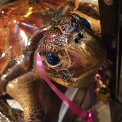 Sköldpadda utanför en thailändsk restaurang