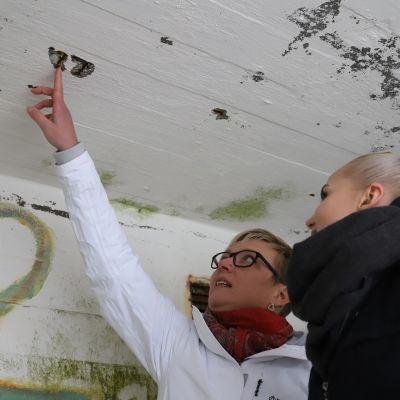 Mirka Marttinen ja Jemina Turkia tutkivat korsun kattoa.
