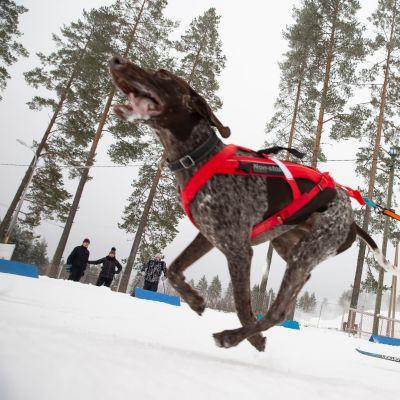 Kati Mansikkasalo-Jurvelin