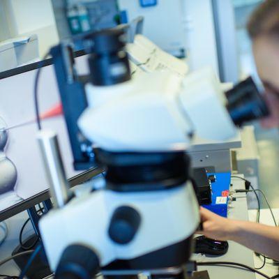 Tutkija katsoo mikroskoopin läpi.