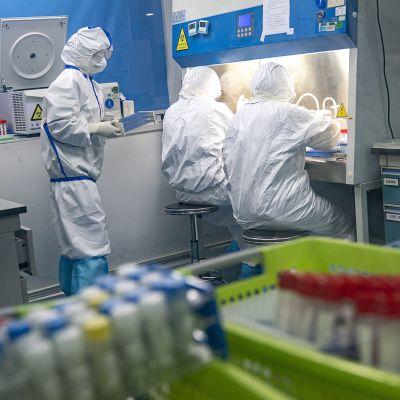 Personer iklädda skyddsutrustning hanterar coronaprov i ett laboratorium i Wuhan, Kina.
