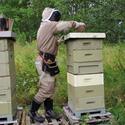Hoitaja mehiläispesäällä