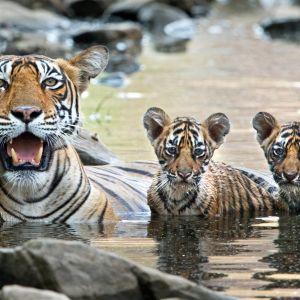 Millaisia haasteita eri eläinlajien pennut kohtaavat ja millainen on niiden itsenäinen alkutaival?