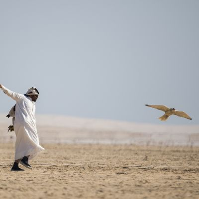 Etenkin Persianlahden maiden haukkametsästäjät suosivat Irakin kaltaisia maita, joissa luonnonsuojelu on heikkoa. Metsästäjä haukkoineen Qatarissa viime tammikuussa.