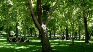 Teheranbor på picknick i Mellatparken.