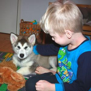 Hundvalp ligger bredvid pojke.
