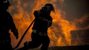 Chilensk brandman bland lågorna i Constitucion 26.1.2017