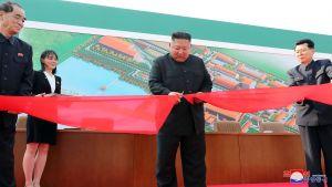 Kim Jong-un leikkaa punaista nauhaa lannoitetehtaalla.