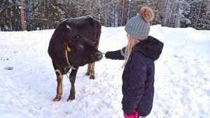 Musta vasikka ja pikkutyttö lumisella pihalla