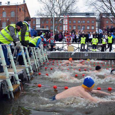 Herrarna startar på 25 meter bröstsim i de finländska mästerskapen i vintersimning,