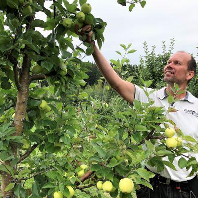Omenanviljelijä Kimmo Järvinen