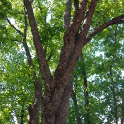 puunhoito puu vantaa