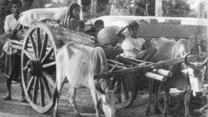Taisteluita ja bengalien joukkomurhaa paenneet pakolaiset palaavat kotiin Intiasta (1972).