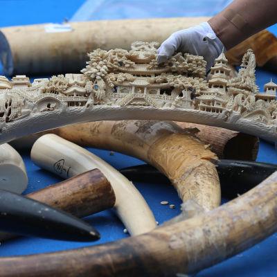 Konfiskerat elfenben i Kina har förstörts.